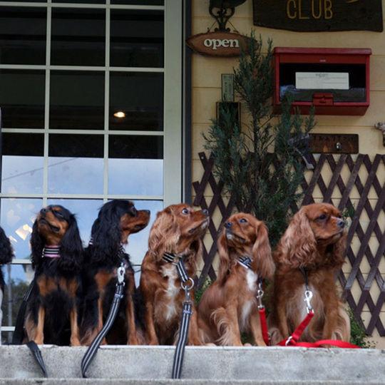 厳選犬の宿